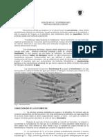 innovaciones biológicas 3º diferenciado