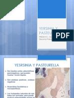 Yersinia y Pasteurella
