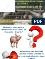 Problemas Alimentacion Cerdos Engorde