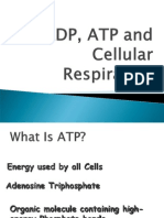 Ad Pat p and Cellular Respiration