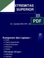 Surface Extremitas Superior-maret 2012