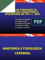 Anatomia e Fisiologia Cerebral
