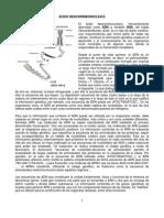 ADN - ácido desoxirribonucleico