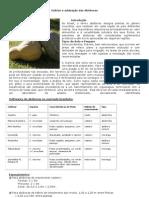 Cultivo e adubação das Abóboras