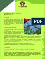 Agerato.pdf