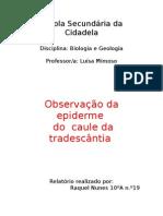 Relatório de Trabalho Práctico de Biologia-Geologia-Observação da epiderme   do  caule da tradescântia