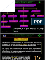 sistemaesqueletico9-100419080429-phpapp02