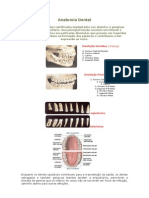 Anatomia Dental