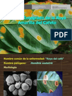 Manejo Integrado de La Roya Amarilla