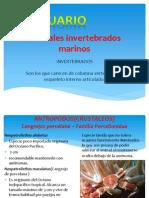 Invertebrados Acuaticos Para Acuario