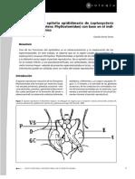 Descripción del epitelio epididimario de Leptonycteris curasoae (Chiroptera