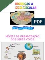 ORGANIZAÇÃO CELULAR