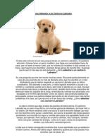 Cómo Adiestrar a un Cachorro Labrador