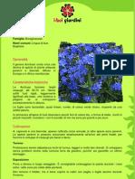 Anchusa.pdf