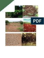 Types of Soil.doc