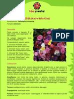 AstroPrincipessa.pdf