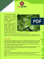 Basilico.pdf