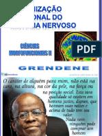 ORG. FUNCIONAL DO S.N. - NEURÔNIO- S.N.A. CMF II 2013(Portal)_20130311120258