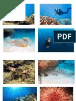 Dangerous Marine Life
