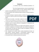Resumen Citoplasma