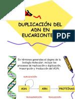 2.- Duplicación del ADN en Eucariontes4