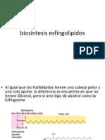 biosíntesis esfingolipidos