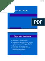 Plagas en trigo.pdf