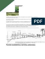 Ecología del manglar