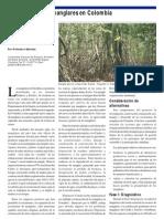 Conservación de manglares en Colombia