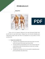 Anatomi Dan Fisiologi Otot Dan Tulang Pada Manusia