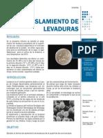 Informe de Aislamiento de Levaduras (Alimentos)