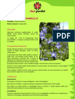CampanulaPyramidalis.pdf