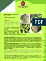 Cavolo.pdf