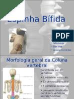 Espinha_Bifida apresentação