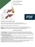 Resumen Fisiologia Gral Educ. Fisica