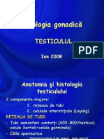 patologie testiculara 2008.ppt