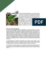 Biocombustibles Historio Economia Colombia