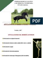 URG - Articulaciones miembros