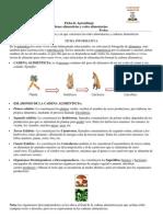 Ficha Redes y Cadenas Alimenticias