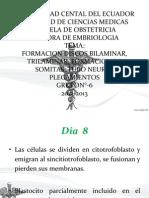 Discos Embriologia
