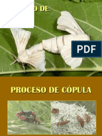 CLASIFICACIÓN DE LARVAS