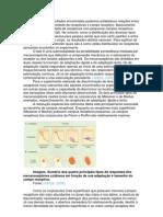 Relatório fisiologia