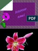 0intelepciune_florala