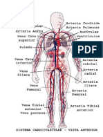 Arterias, Venas y Ventilacion
