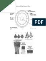 Industrial Hemp Diagrams Sheet