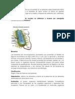 2 BACTERIAS FItrabajo de Ciencias de La Saludcardi