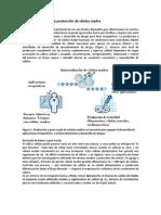 Industrialización de la producción de células madre-1