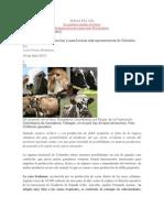 Ganados Colombianos, Razas Mas Importantes