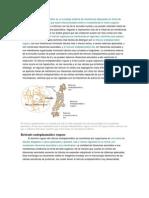 reticulo endosplasmatico