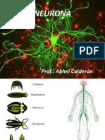 Clase 1 Neurona